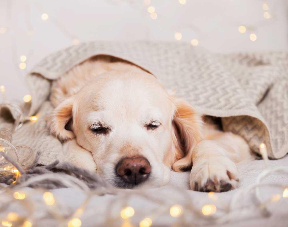 Healing til hund - Fjernhealing v. Berit Højgaard