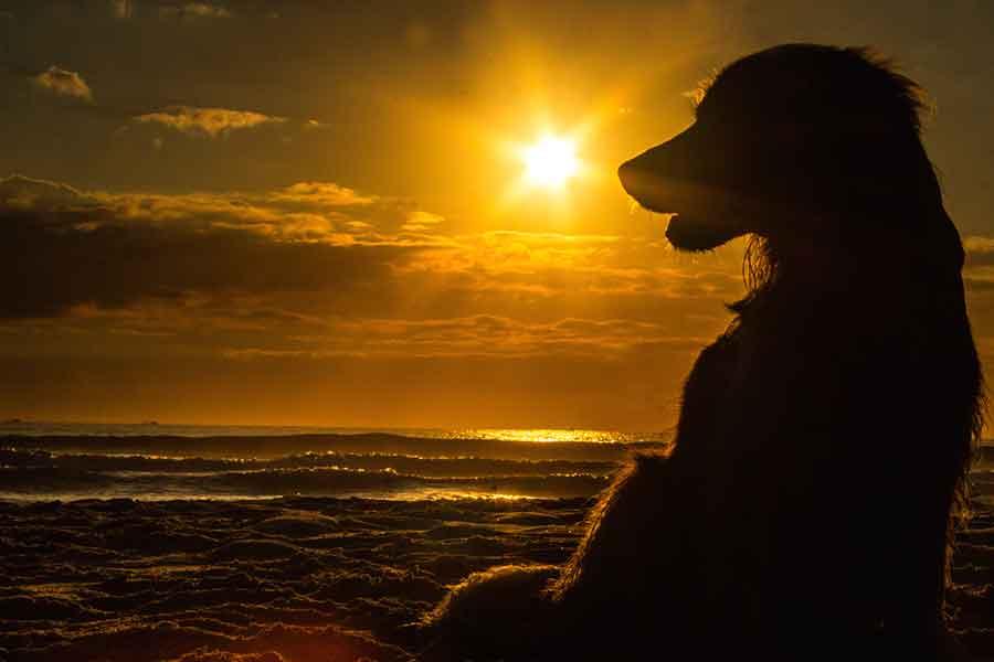Klarsyn - Spirituel vejleder for mennesker og dyr