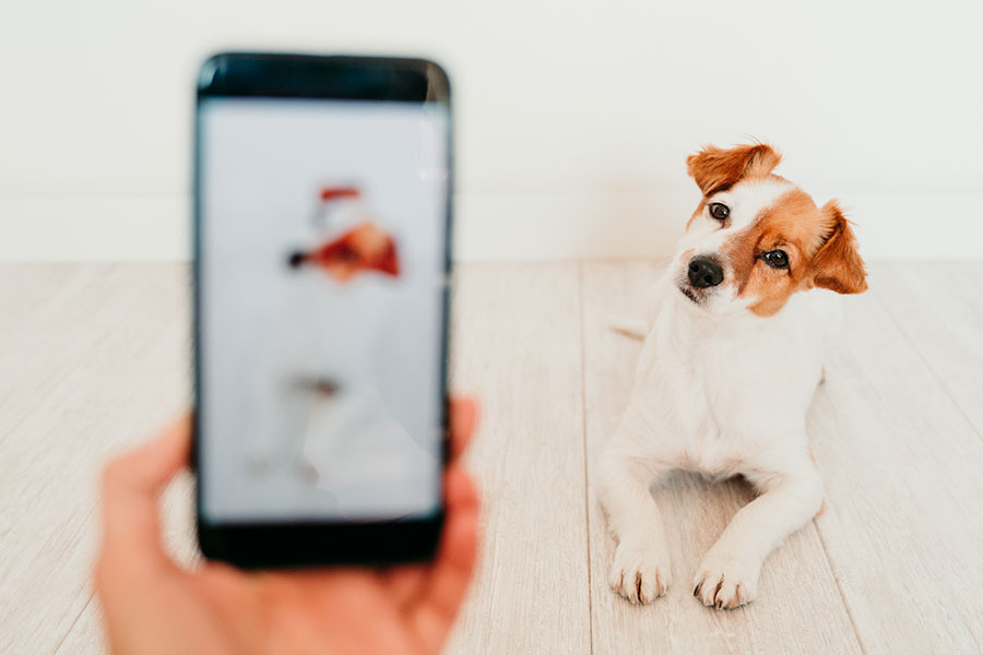 Telepati med din hund via fotografi - Berit Højgaard